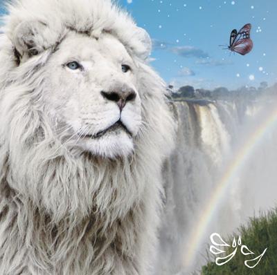 LION_H1